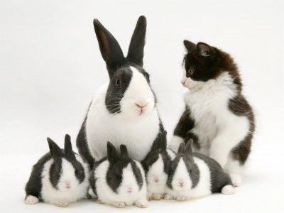 Tuturor cititorilor acestui blog, un Paşte fericit! Hristos a înviat!